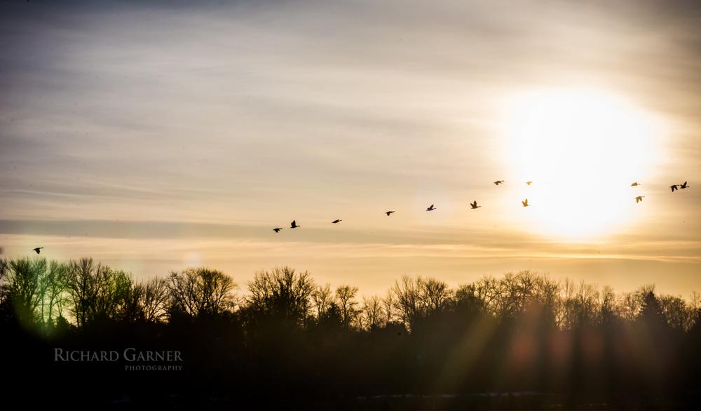 geese sunrise-140411-6000 x 4000.jpg