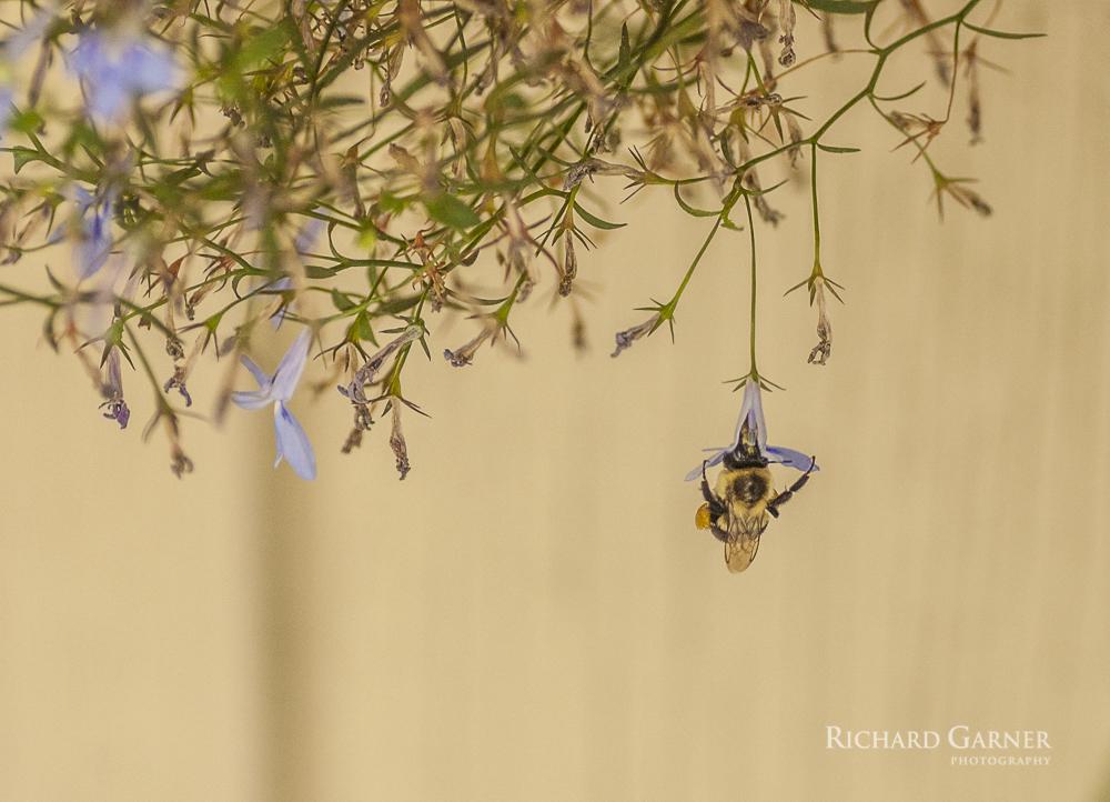12 Hanging Bee 2