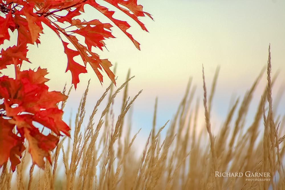 31 Oak Leaves & Grass