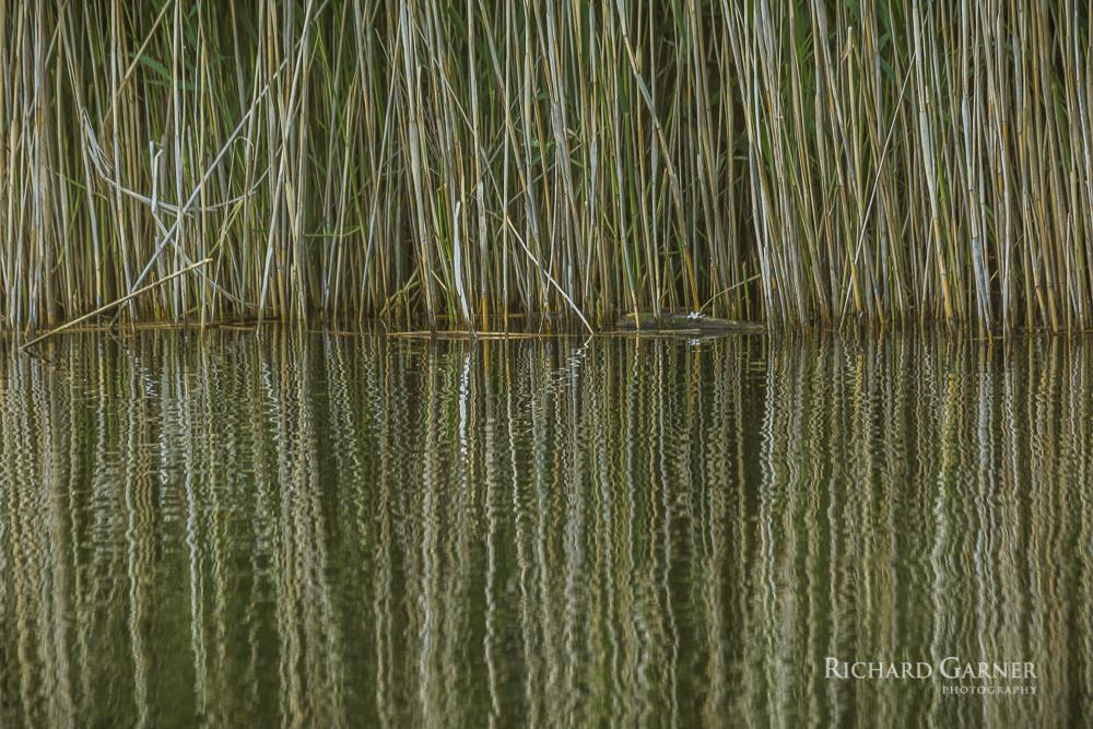 145 Grass & Water