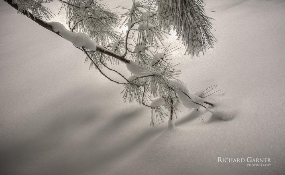 branch in snow  FEB.15-1-150209-6019 x 3708.jpg