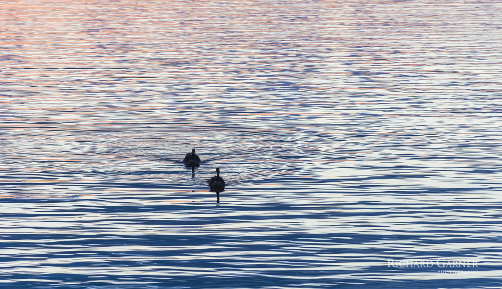 geese sunset harbour-1-140523-5464 x 3148.jpg