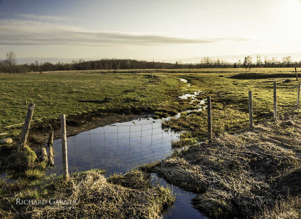 morning meadow-1.jpg