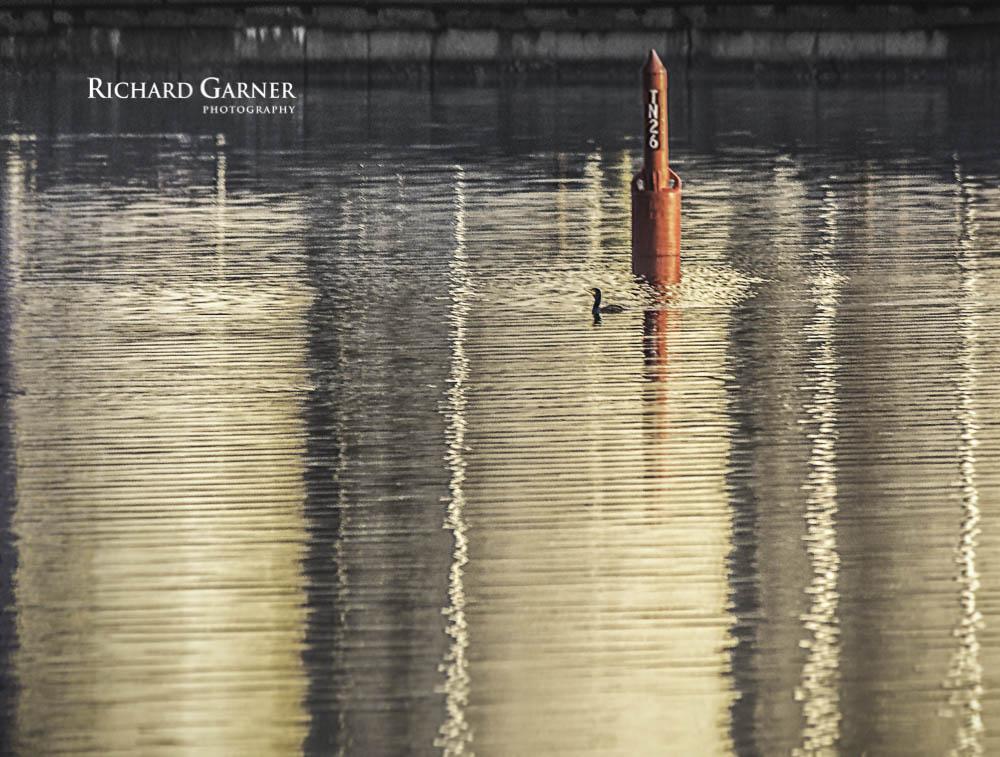 cormorant-1.jpg