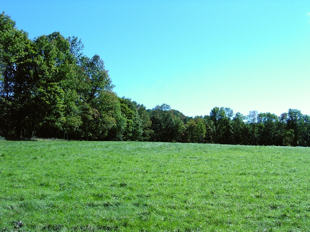 One of two cleared pastures, the rest of the property is wooded