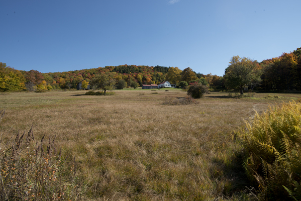 07_Meadow_looking east_3761.jpg