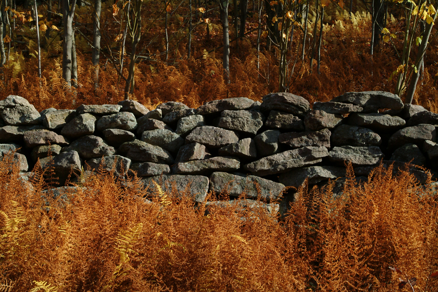 Autumn_Stone_Fence3384_LOW.jpg