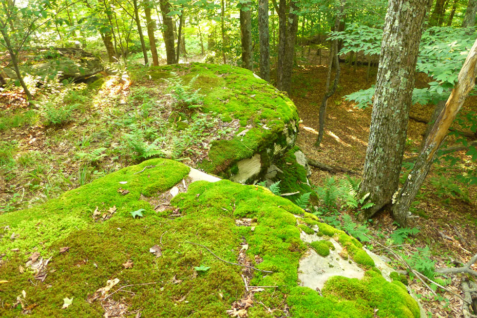 moss on rock cropping.jpg