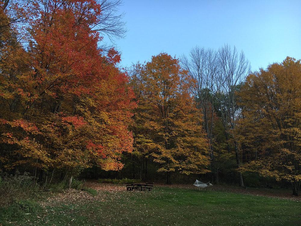 treesfall.jpg