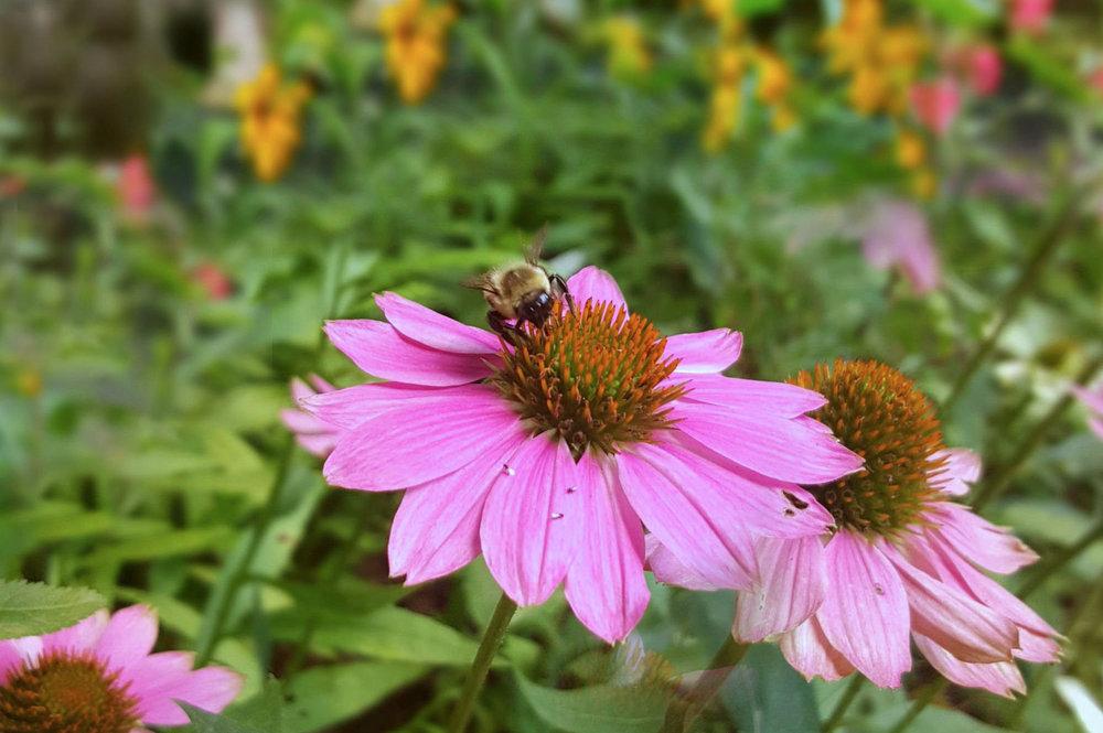 Image 31 56 Upper Lumber Rd Pollinator Garden 8 x 12.jpg