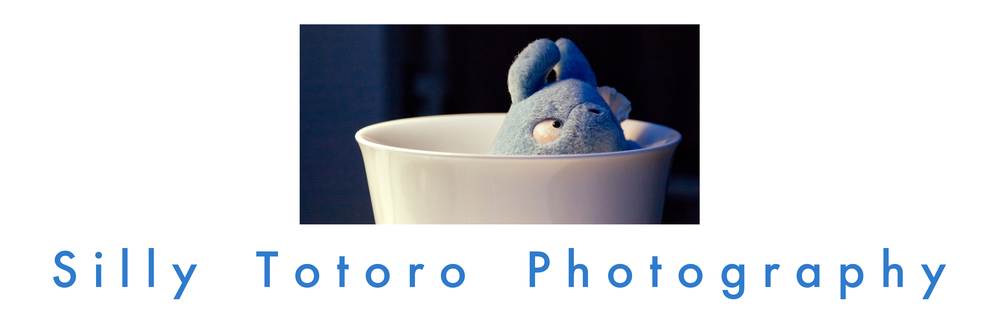 Silly Totoro Photography
