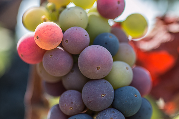 CN_website-winery_600x400_0002_IMG_5411.jpg