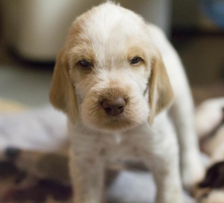 Oskar Puppy.jpg
