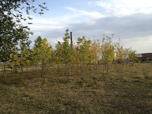1000trees2.jpg