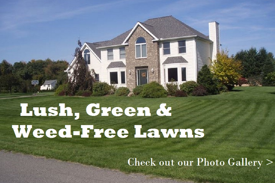 Lawn Care Photos