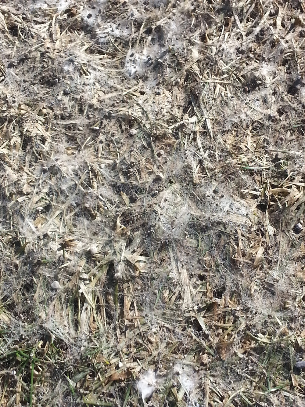 Close-up of Snow Mold