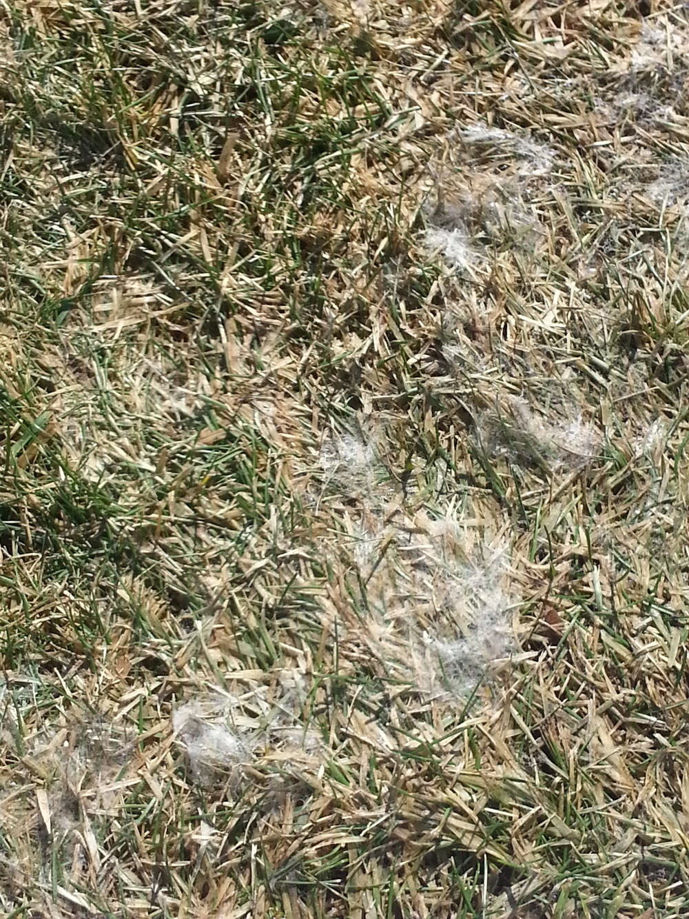 Example of Snow Mold