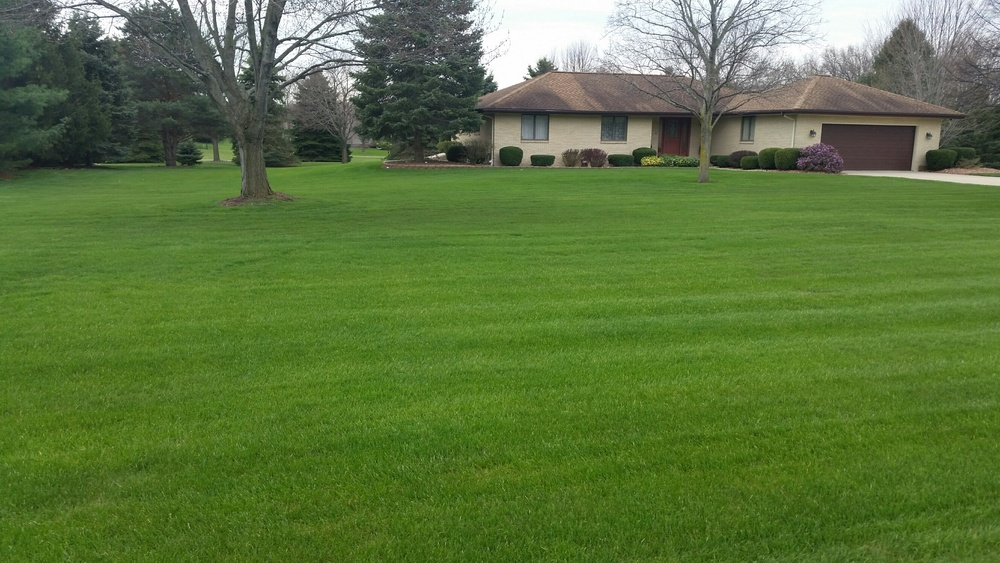 Jackson Feature Lawn 1.1