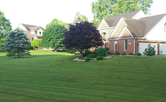 Feature Lawn of the Year
