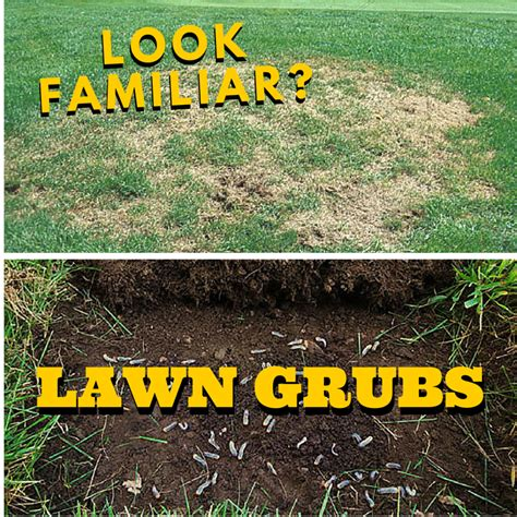 Greenblade One Blog Greenblade One Local Lawn Care Grand