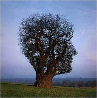 25 Amazing Optical Illusions You May Have Not Seen Before 4.jpg