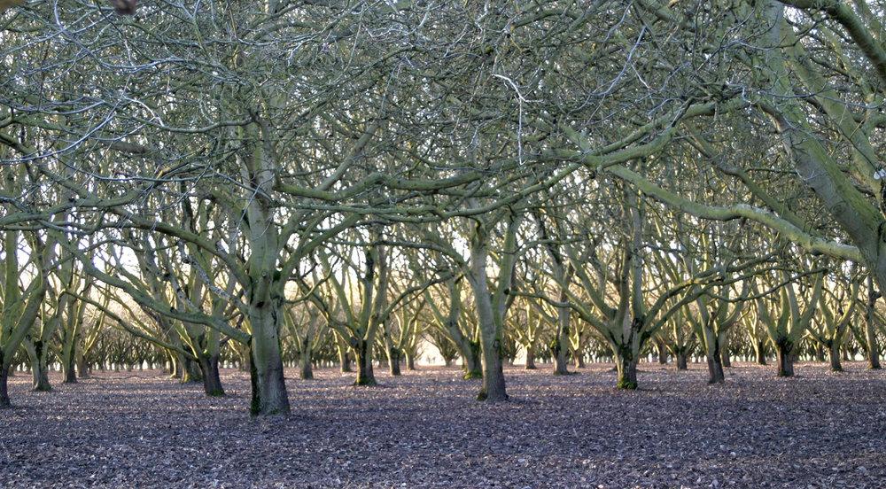 1500 Wooded Path.jpg