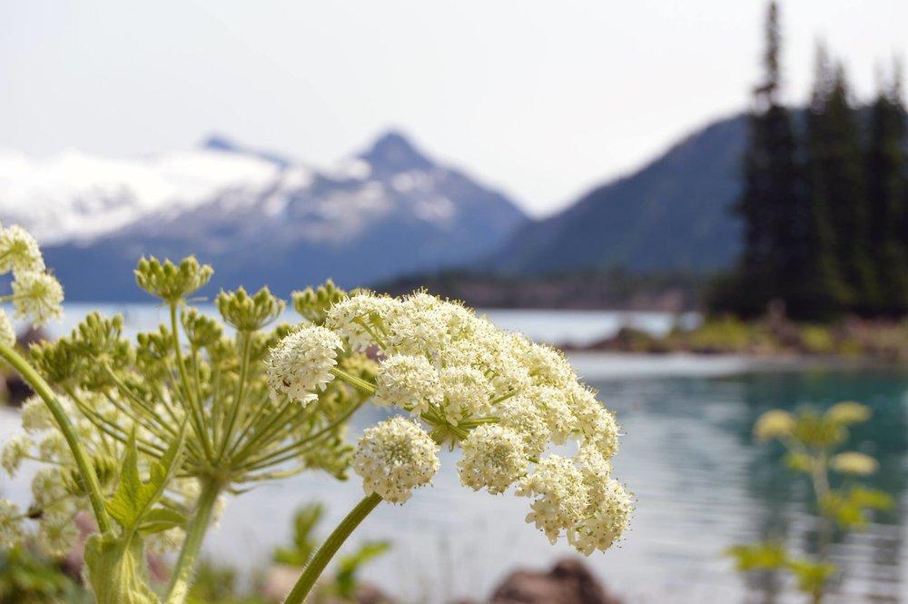 Squamish 02.jpg