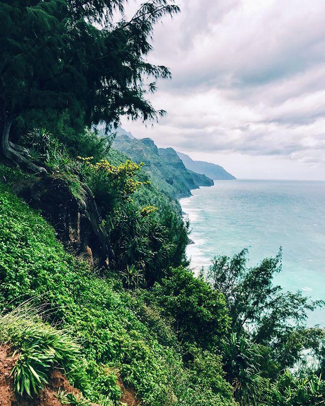 Hiking through the jungle 🌴