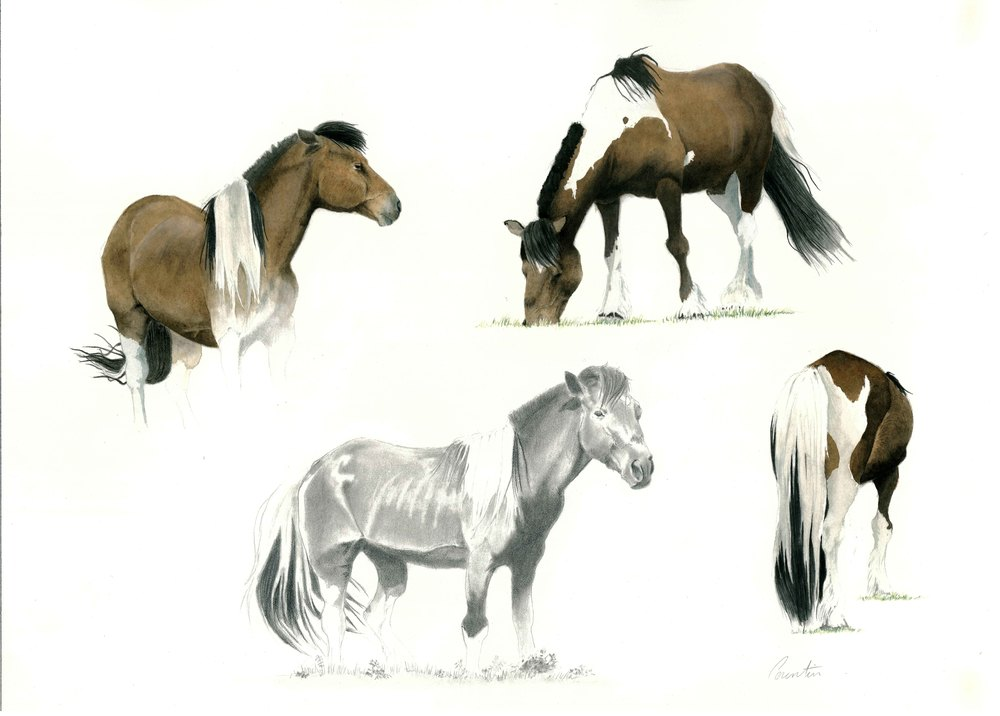 Étude de chevaux   Aquarelle sur papier Arches satiné  (vendu)