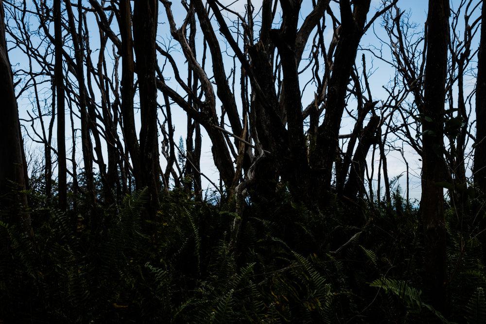 Waihee RIdge Trail (7 of 14).jpg