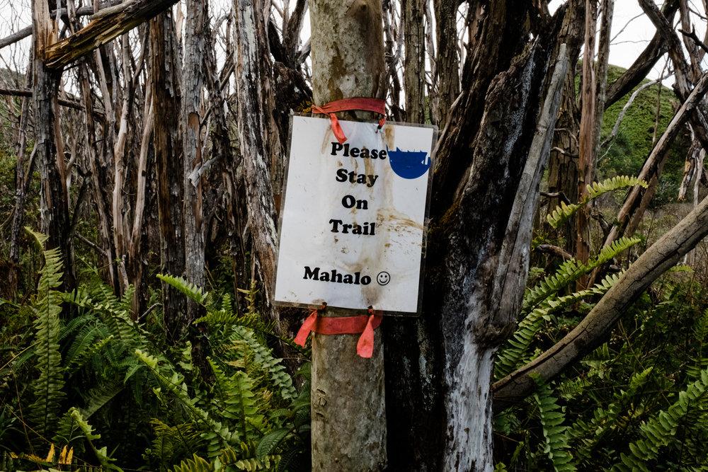 Waihee RIdge Trail (8 of 14).jpg