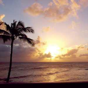 hawaiipalmtree1.jpg