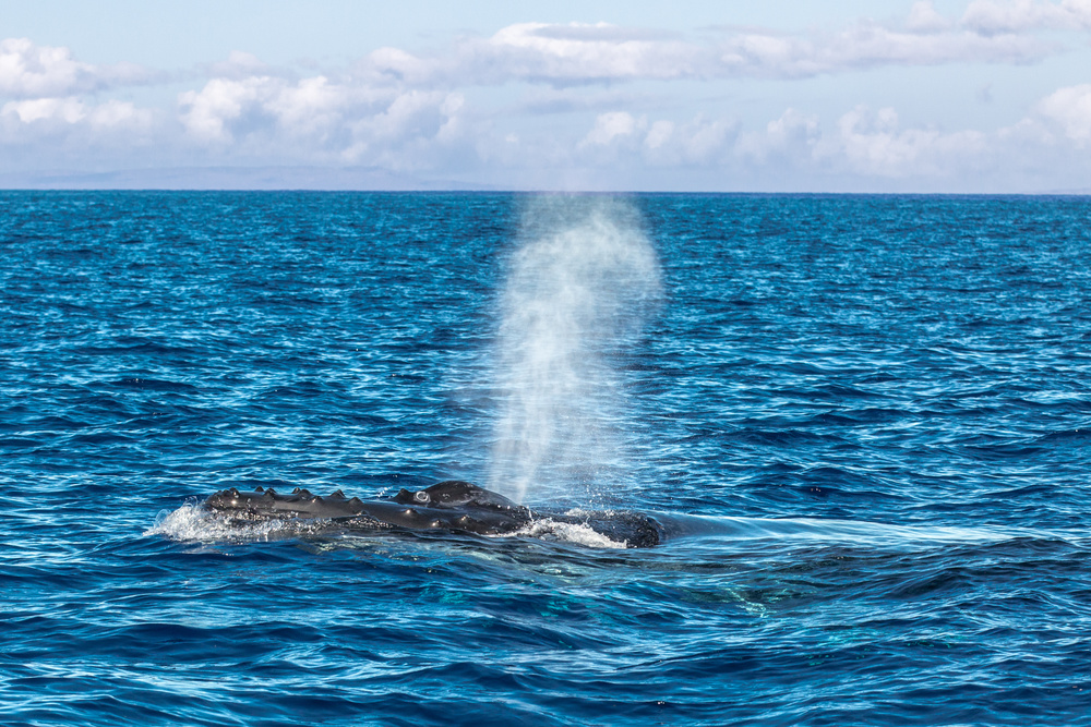 """This is not my photo, but it's better than a photo of water  captioned with """"There are whales in the ocean."""""""