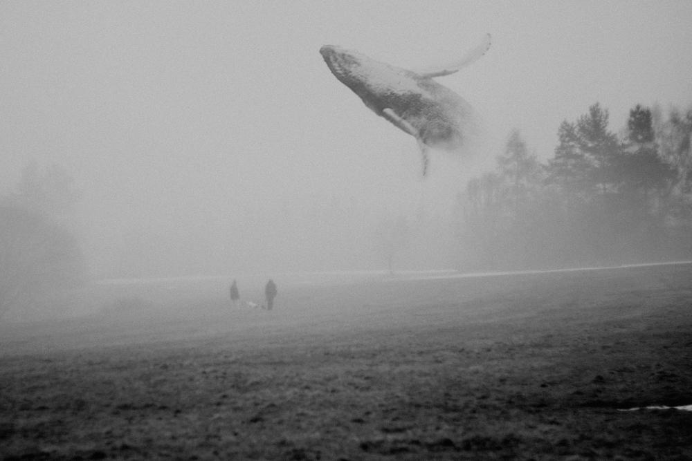 Martin Vlach Sky Whales Studiorubbo