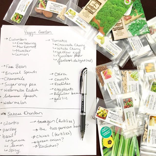 "It's that time again!!! Planning out my summer garden!! 😊😊I got my hands on a bunch of seeds and I'm excited to see how they turn out this year. I've got a mix of basics I always grow and a few new ones I want to give a try like Brussels sprouts and favs beans! 😱 I hope they actually grow 🤞🏻 😅. I'm also growing 5 varieties of cherry tomatoes and 4 varieties of cucumbers! And of course I have my Persian style ""sabzee khordan"" garden to grow! 😅 Anybody else planting a garden? What are you growing? 😊 #garden #gardening #veggies #veggiegarden  #food #plants #seeds #grownfromseed #local #farmtotable #ottawa #otown #spring #summer #hijabi #muslimah #iraniangirl"