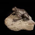 Gd-Frog-0046-150x150.jpg