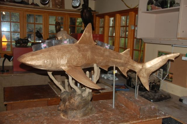 Image 62 In Progress Shark.JPG