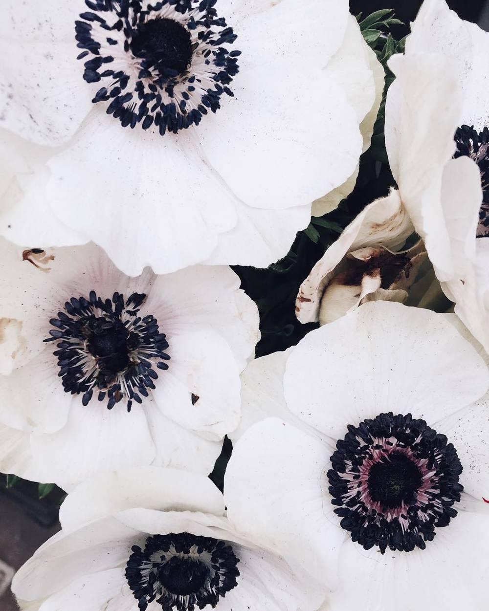 Liberty_flowers__.__libertylondon_by_mija_mija.jpg