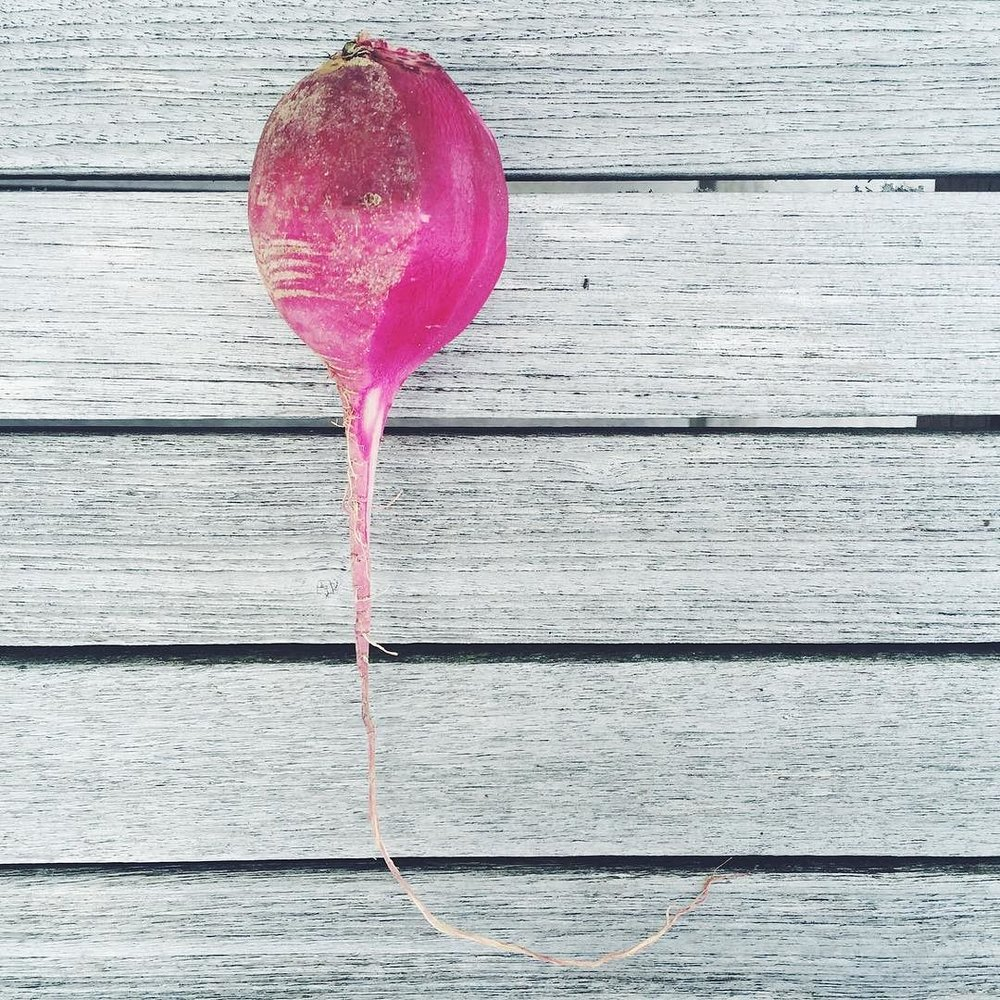 watermelon-radish.jpeg
