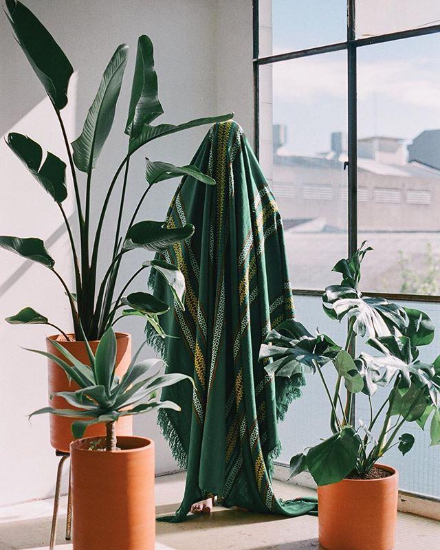 matagalanplantae-satanscoffeecorner-barcelona-06.jpg