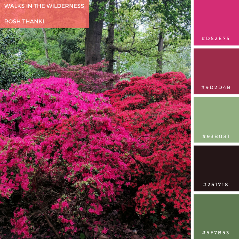 colour-palette-walks-in-the-wilderness-red-pink-flower-bush-bushy-park
