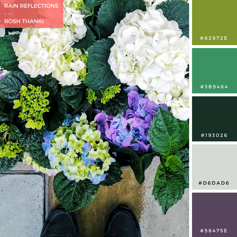 Colour Palette for Rain Reflections by Rosh Thanki, hydrangeas from that flower shop, shoreditch
