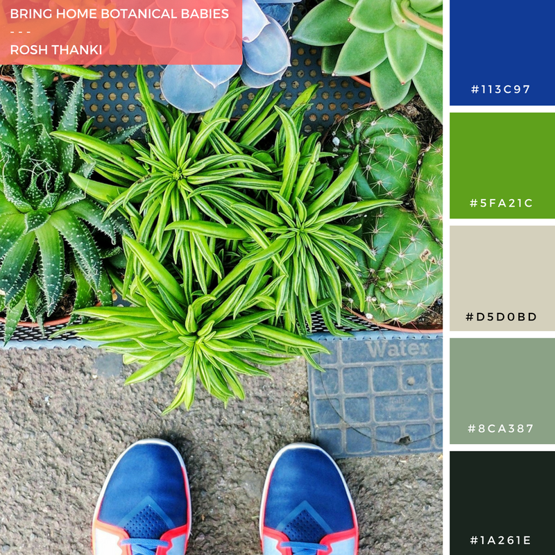 Colour Palette for Bring Home Botanical Babies by Rosh Thanki, Botany plant, cacti and succulent shop in Hackney