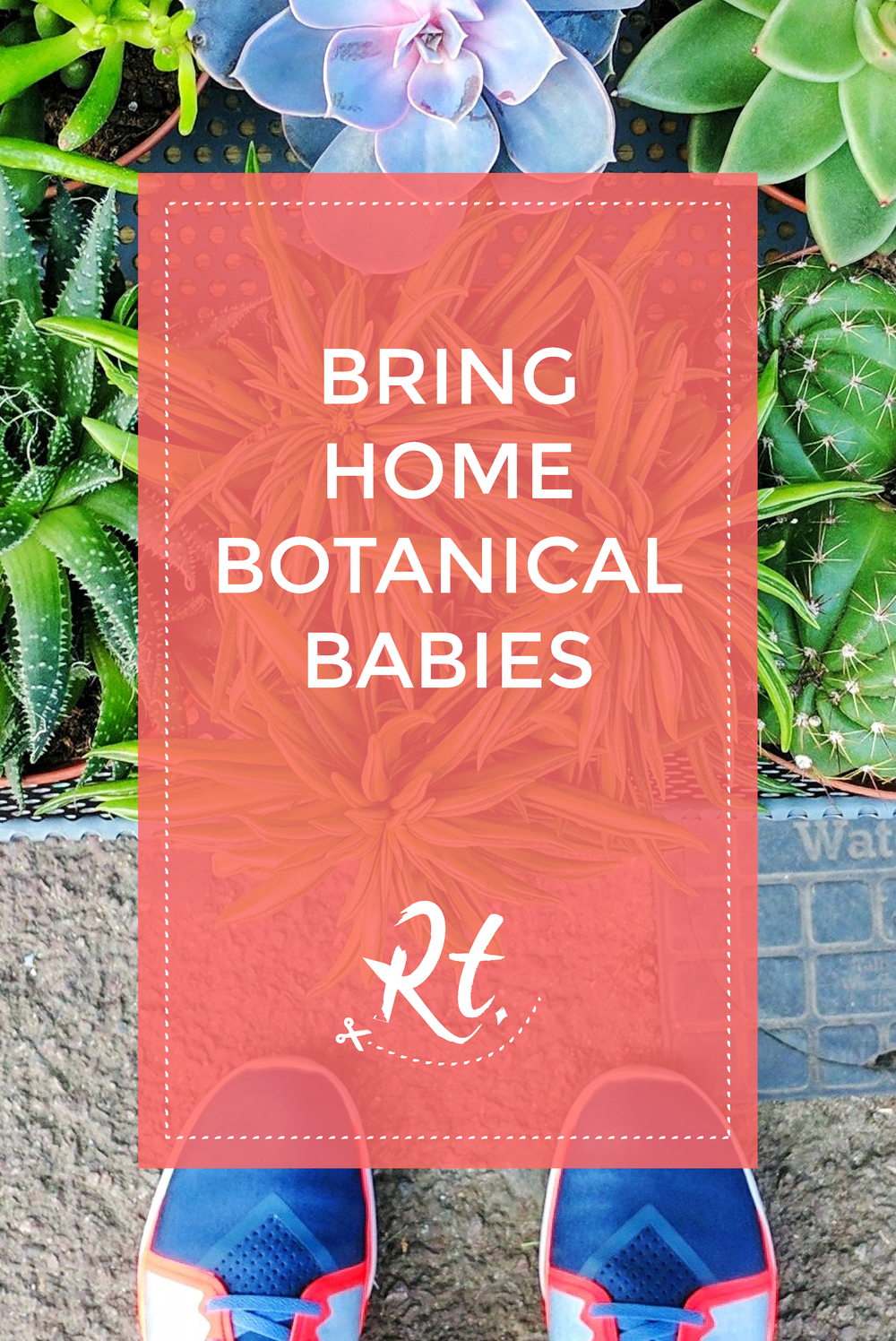 Bring Home Botanical Babies by Rosh Thanki, Botany plant, cacti and succulent shop in Hackney