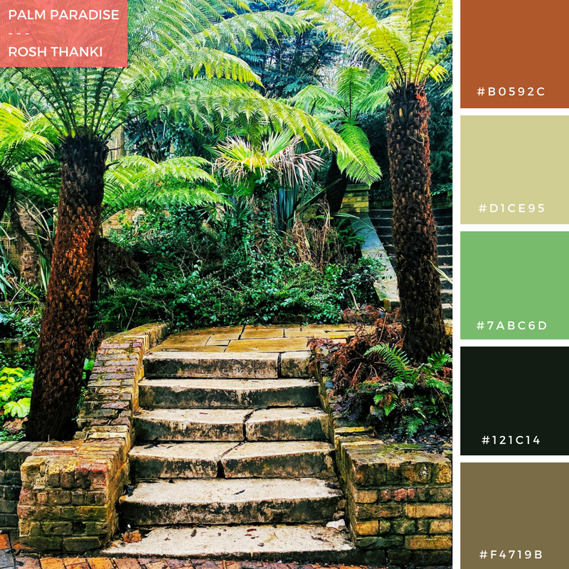 Colour Palette for Palm Paradise by Rosh Thanki, Holland Park palm trees