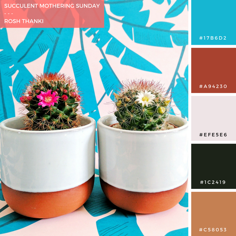 Colour Palette for Succulent Mothering Sunday, Prick LDN cacti