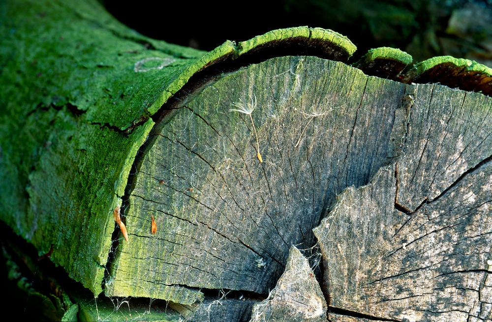 Tree Edge