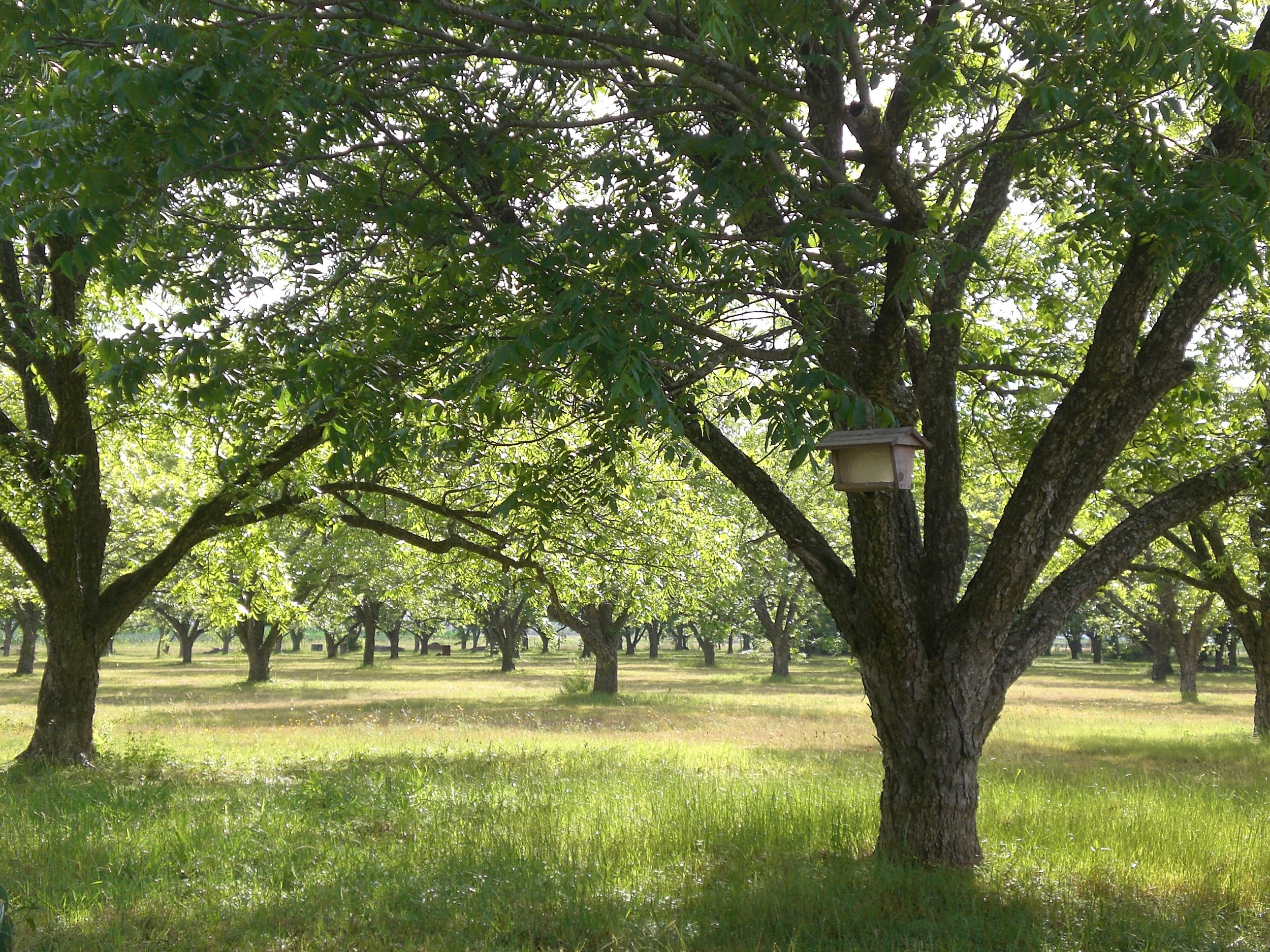 Liz and Robert's 9 acre orchard just outside of Austin, TX