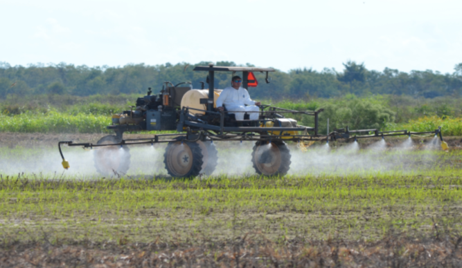 """Application of herbicide for management of weedy rice.""   Source: LSUAgCenter.com, Weed Science"