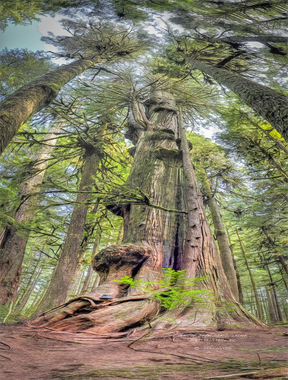 Avatar Grove Giant Cedar #1